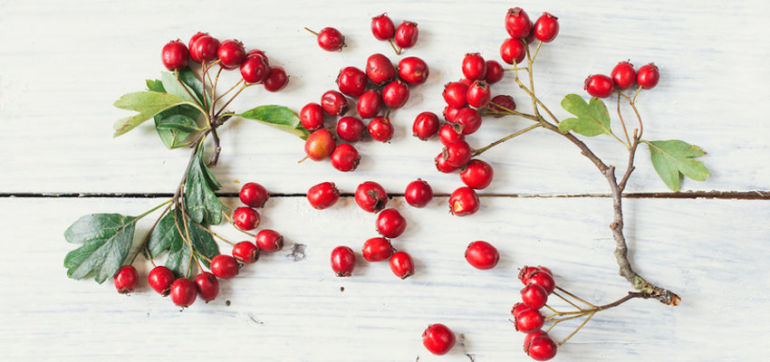 3 Reasons To Add Rosehip Oil To Your Skin Care Routine Hero Image