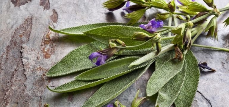 Feeling The Heat? 3 Herbs To Help You Cool Down Hero Image