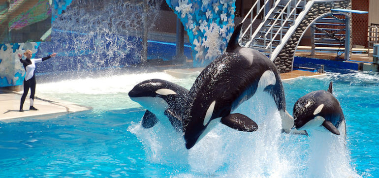 SeaWorld Promises To Make Killer Whale Tanks Bigger Hero Image