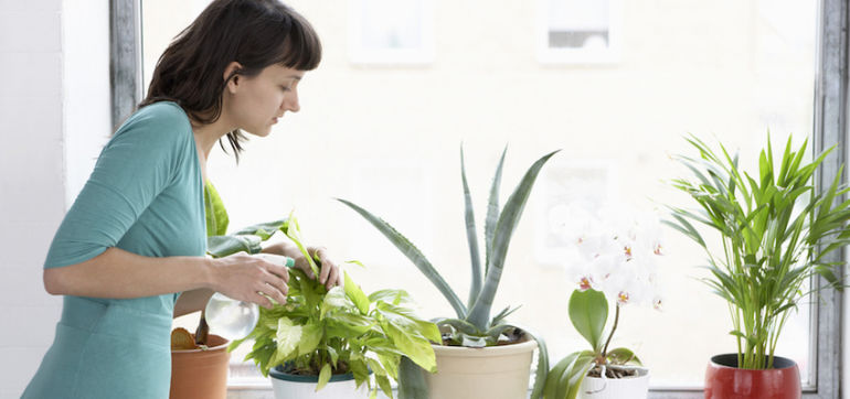 3 Reasons You Should Have More Plants In Your Home Hero Image