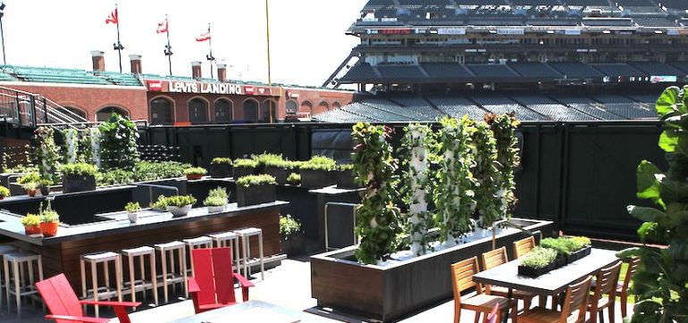 A Major League Ballpark That Grows Its Own Fresh Fruits & Veggies! Hero Image
