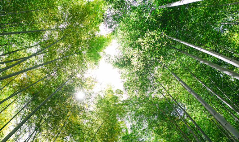 The Magic of Forest Bathing + How To Incorporate It Into Your Self-Care Routine Hero Image
