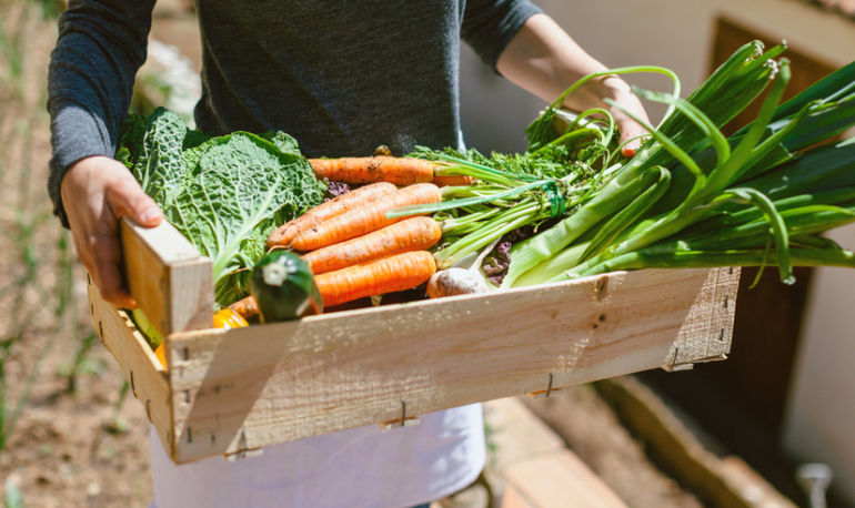 5 Tips To Make Getting Affordable, Healthy Produce A Breeze Hero Image