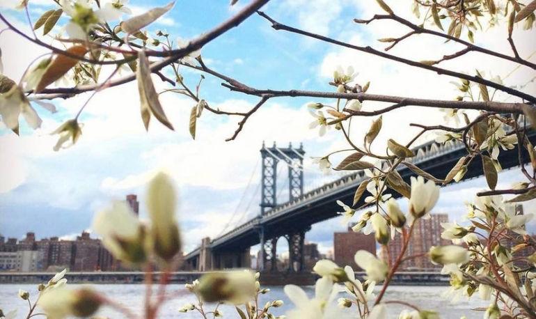 A Wellness Mecca Grows In Brooklyn Hero Image