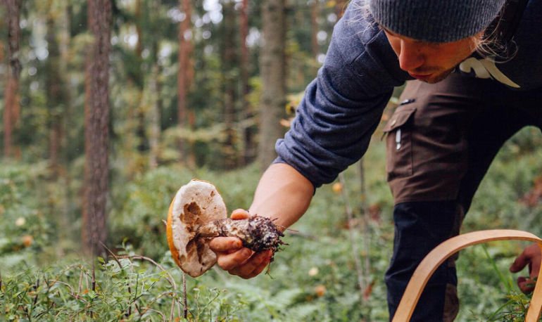 Why I Quit My Corporate Job To Become A Healing Mushroom Expert Hero Image