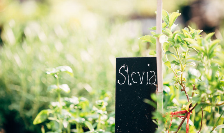 All You Need To Know About Stevia + How To Switch From Sugar Hero Image