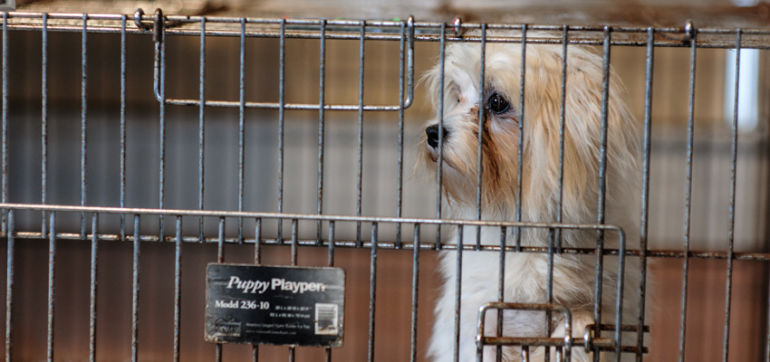 4 Ways To Stop Puppy Mills (And Why You Should Care) Hero Image