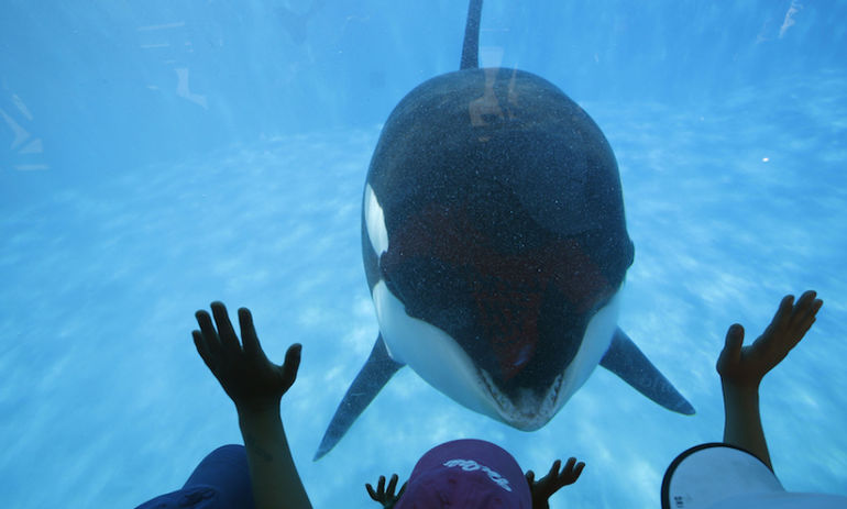 SeaWorld Is Finally Phasing Out Its Killer Whale Show Hero Image