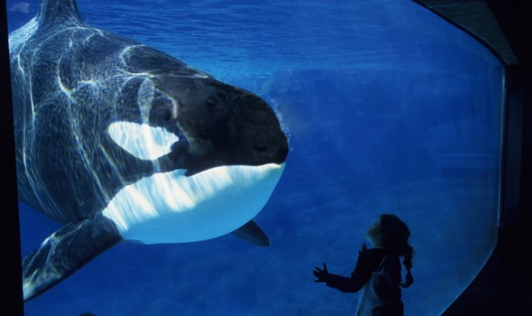 SeaWorld Will Finally Stop Breeding Whales In Captivity Hero Image
