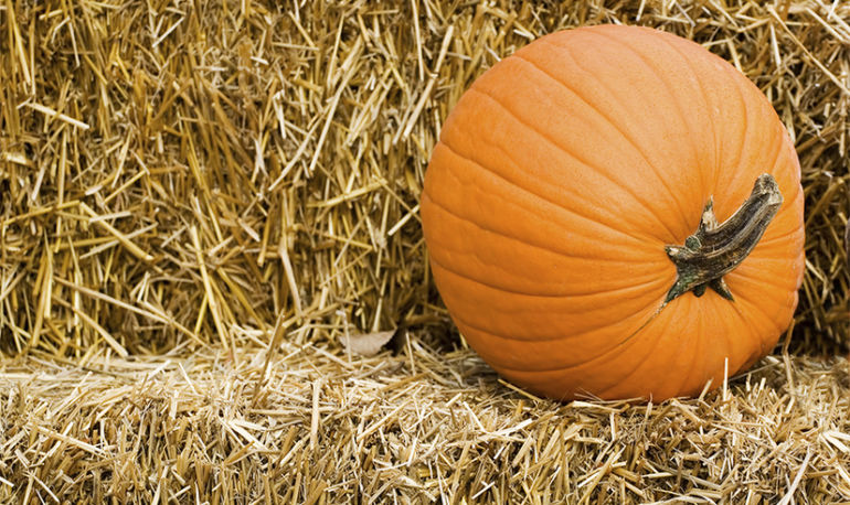 9 Exercises You Can Do With A Pumpkin (No Joke!) Hero Image