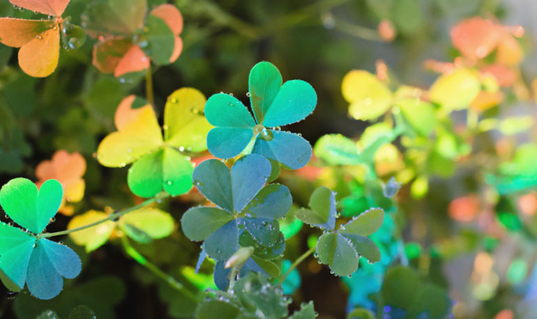 Yes, You Can Cultivate Luck. Here's How Hero Image