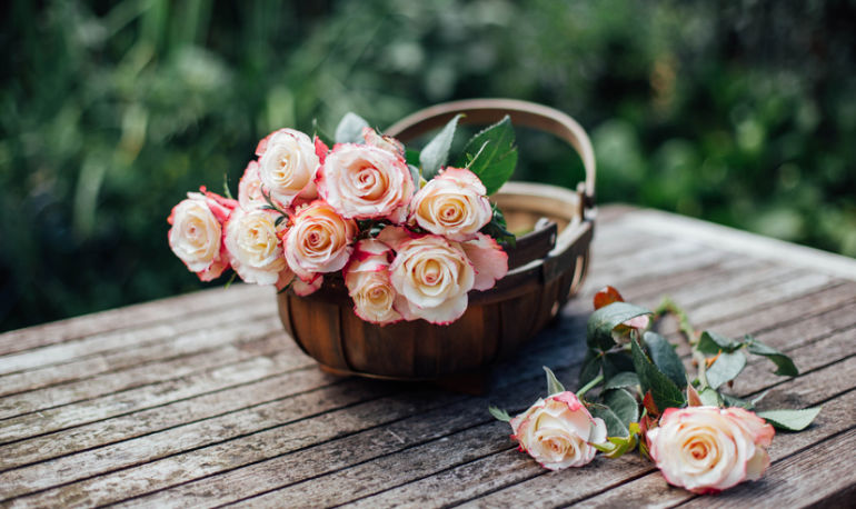 How Rose Essence Can Heal Your Body & Soothe Your Soul Hero Image