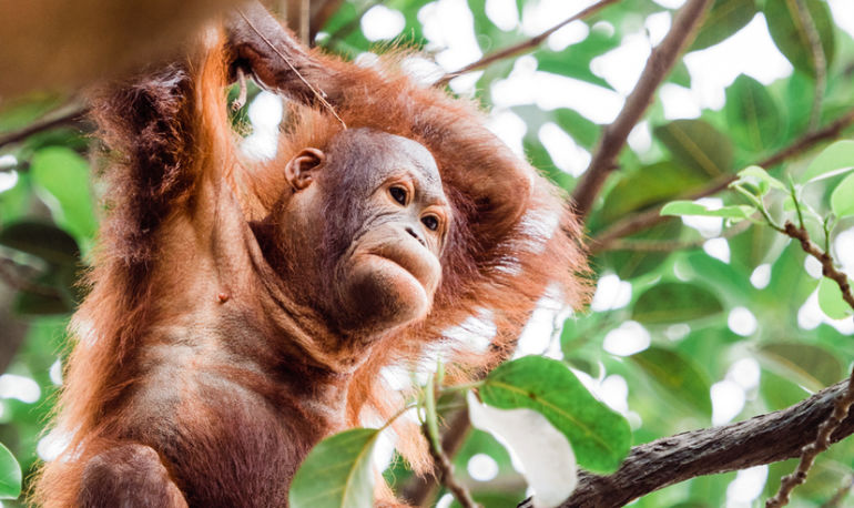 Everything You Need To Know About Palm Oil & The Environment Hero Image
