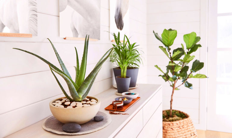 This Advice Will Keep Your Houseplants Alive Forever & Ever Hero Image