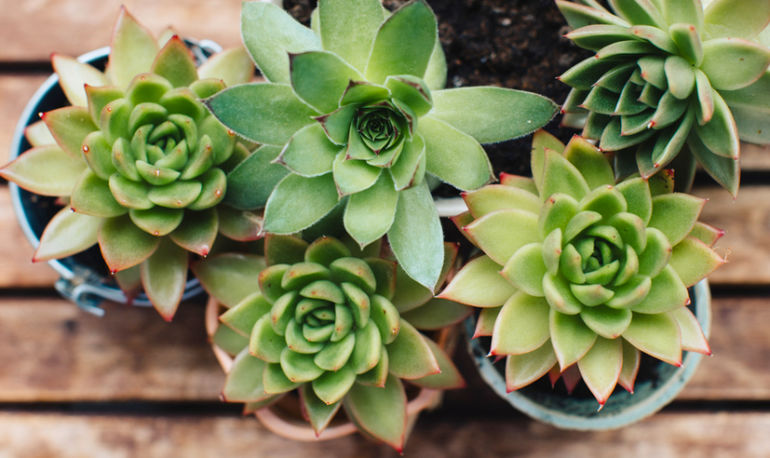 How To Diagnose & Save Your Sick Houseplant, Stat Hero Image