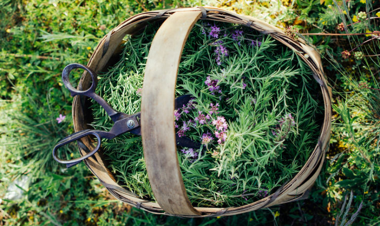 In A Stressful Situation? 7 Medicinal Herbs To The Rescue Hero Image