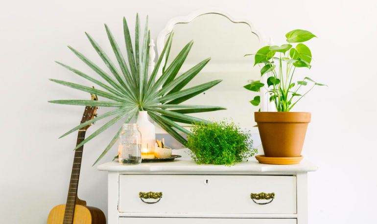 Houseplants 101: Everything You Need To Know To Start An Indoor Jungle Hero Image