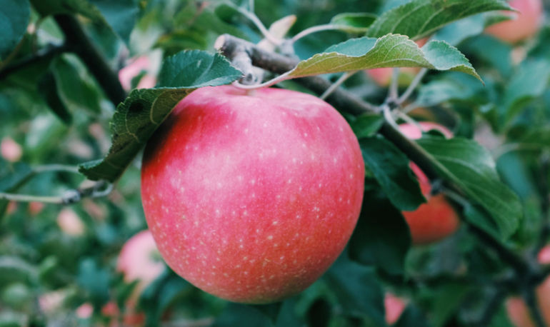 10 Scientifically Backed Health Reasons To Go Apple Picking ASAP Hero Image