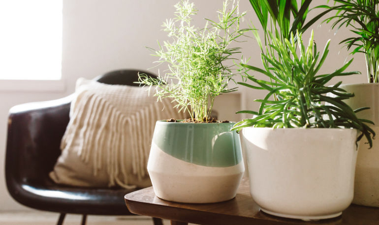 A Feng Shui Healer Spills The Essentials That Should Be In Your Living Room Hero Image