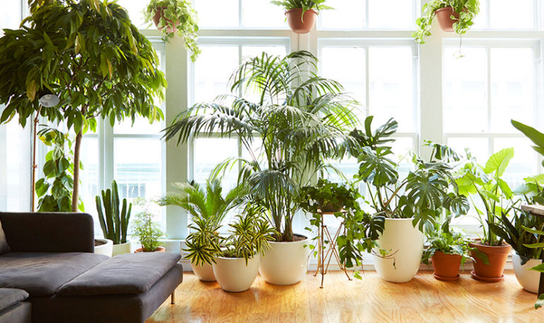 The Giant Houseplant Your Life Is Missing (And How To Keep It Happy) Hero Image