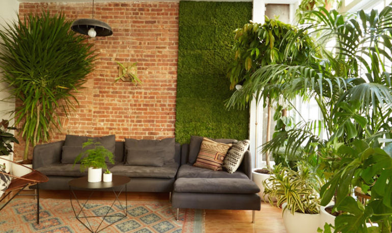 8 Air-Filtering Plants That Will Boost Your Productivity Hero Image