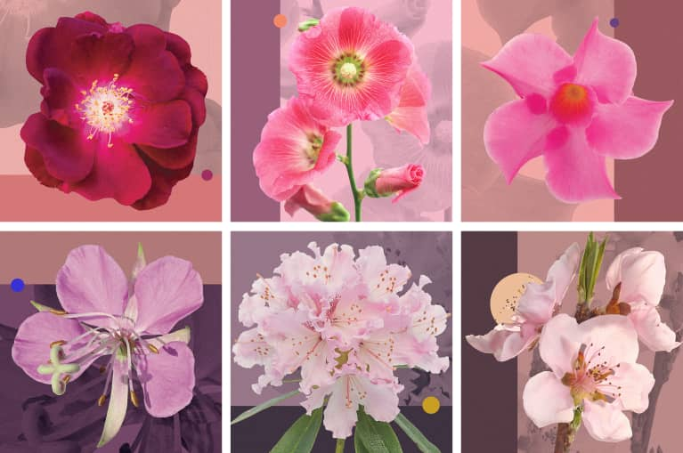 This 10-Second Quiz Reveals What Your Favorite Flower Says About You