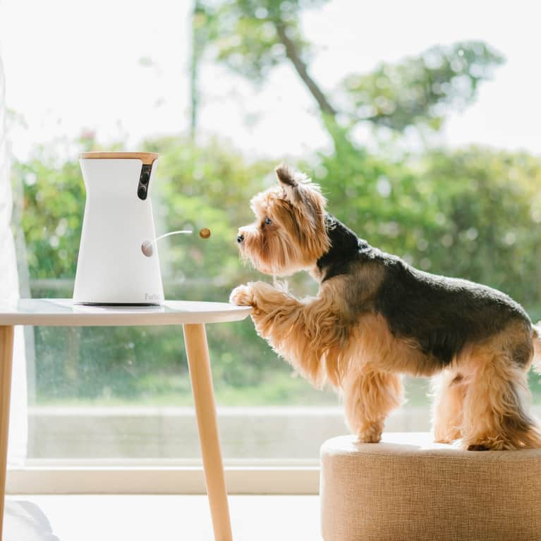 Here's How You Can Help Improve Your Dog's Emotional Well-Being