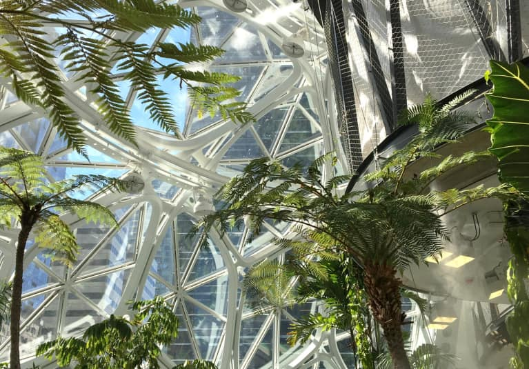 Amazon's New Office Building Is Filled With 40,000 Plants