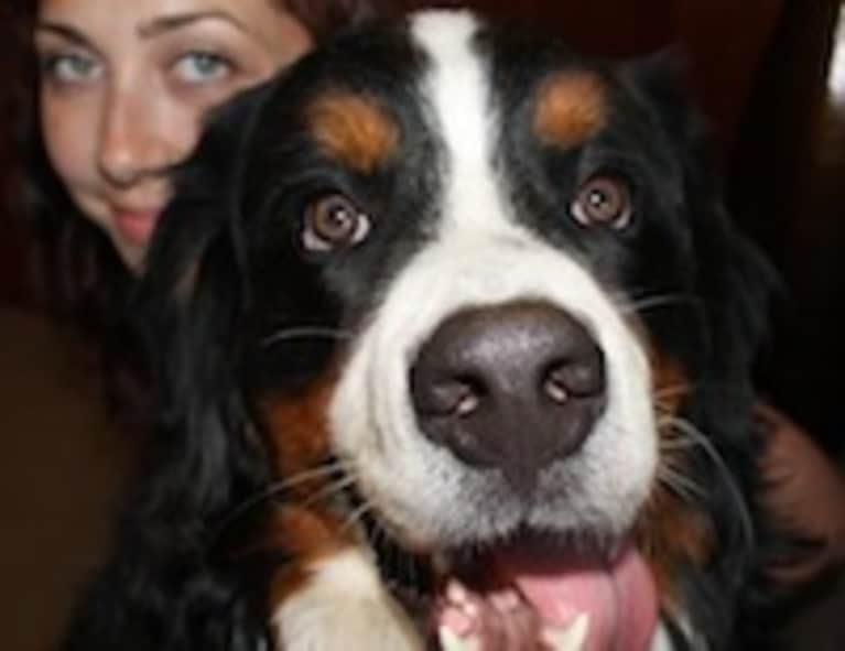 5 Things We Can Learn from Dogs