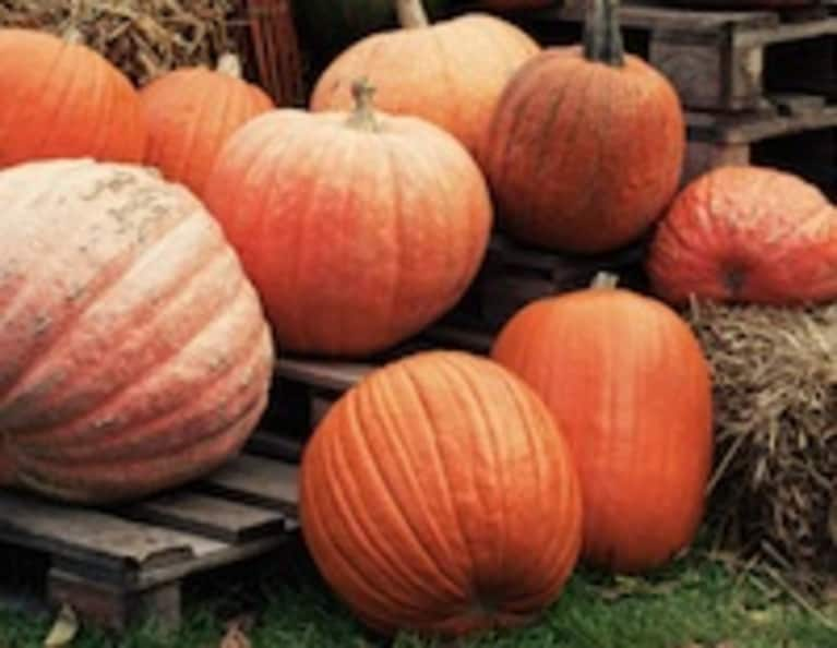 What Yogis Can Learn from Prize-Winning Pumpkin Farmers