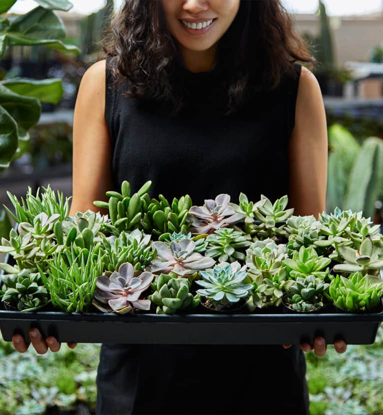 How To Keep Houseplants Alive In Winter, From People Who Know