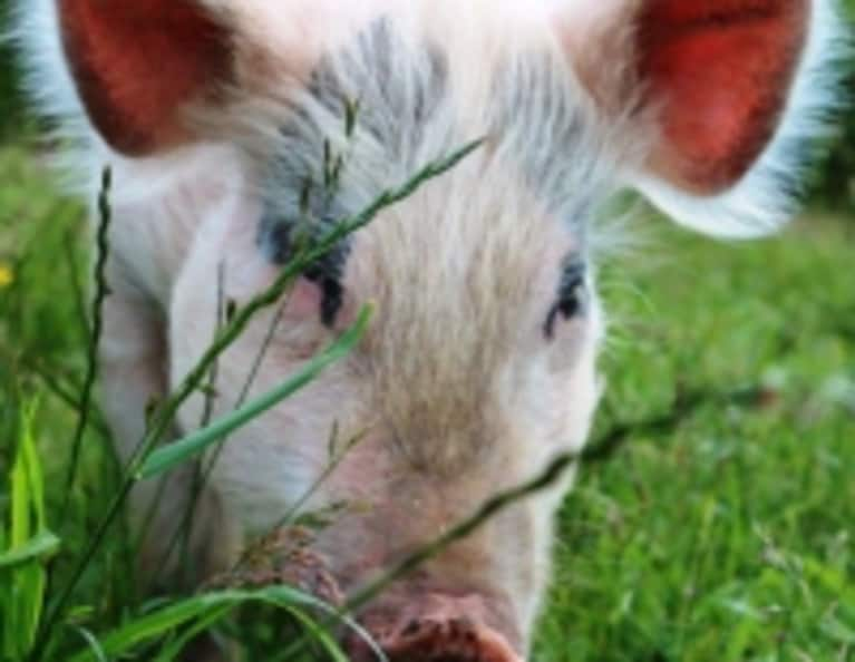 Finding Peace at an Animal Sanctuary