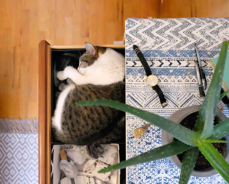 Peace Out, Negative Energy. How You Can Organize Your Home For Well-Being