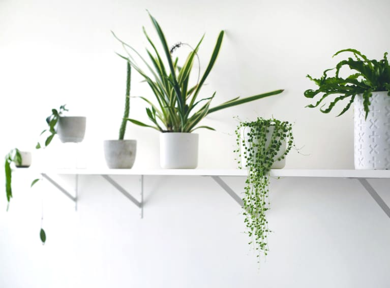 The One Tweak That Makes Plant Care WAY More Fun