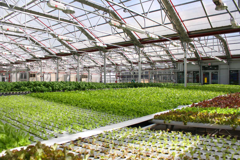 Why Your Next Salad May Come From A Roof, A Boat, Or A Warehouse