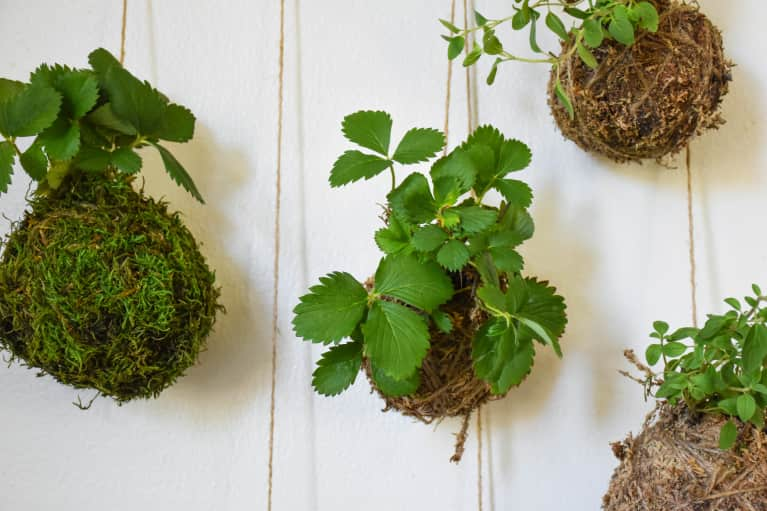 We Found Your Next Houseplant Obsession & It's Called Kokedama