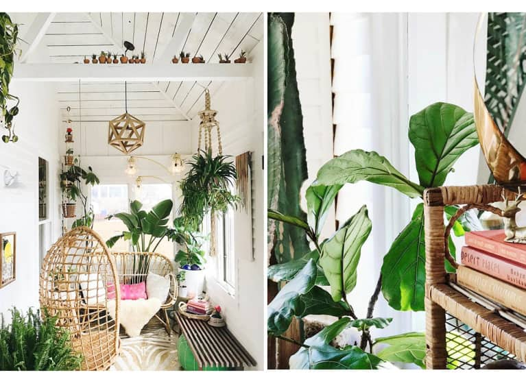This Plant Oasis Is A Nester's Dream. Let's Take A Tour