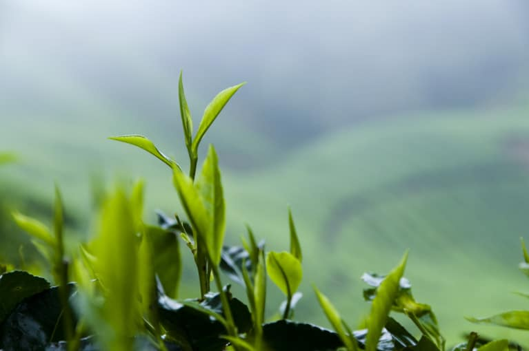 Are You Drinking Toxic Tea? Here's How To Avoid Pesticides & Heavy Metals