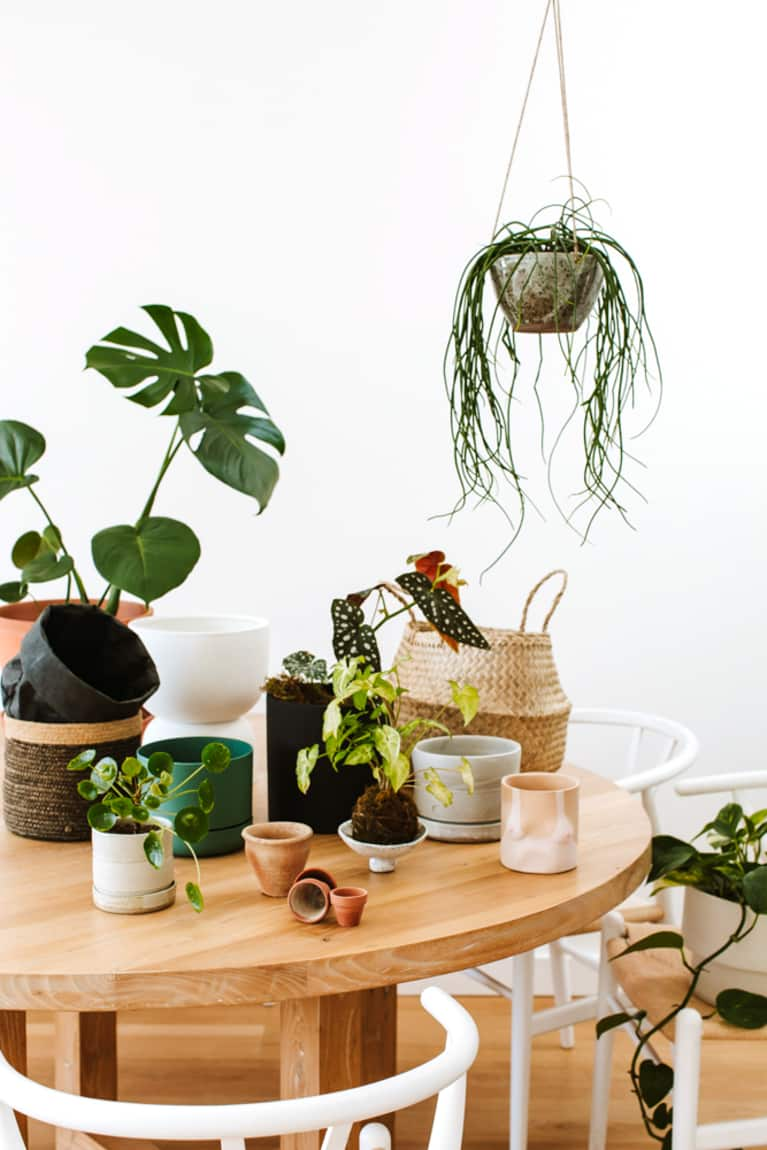 This Trick Will Make Your Houseplants Multiply