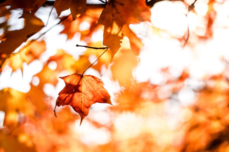 Foliage Guide 2017: Everything You Need To Know For An Epic Fall Outdoors