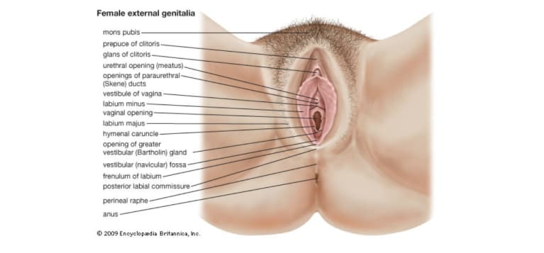 Wonder If You're Normal Down There? This Is What The Perfect Vagina Looks Like