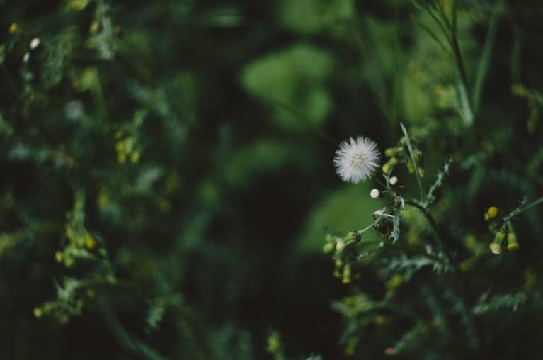 The Anticipatory Hangover Cure + 6 Other Beauty Benefits Of Milk Thistle