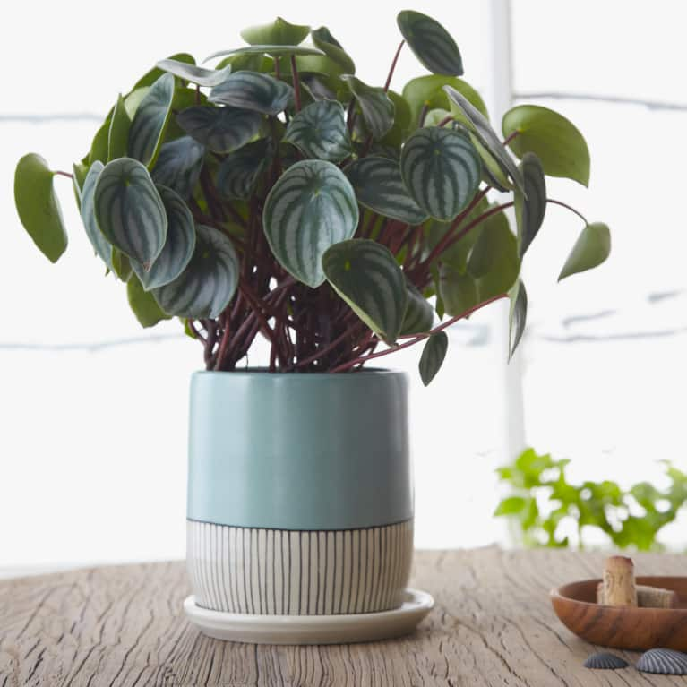 Low-Maintenance Houseplants That Can Thrive Anywhere (Even Your Tiny Apartment)