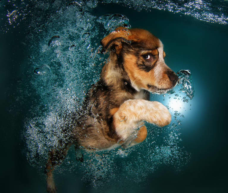 Cute Photos Of Puppies Swimming Underwater (Why Not?!)