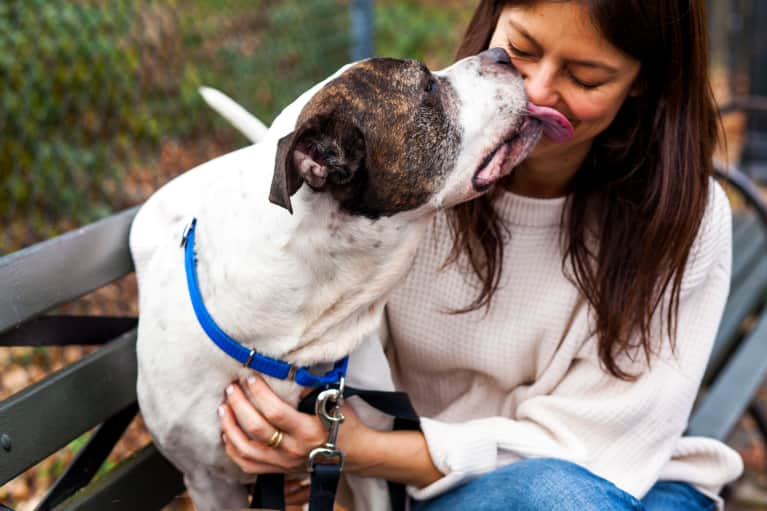 9 Reasons Getting A Dog Seriously Ups Your Wellness Practice