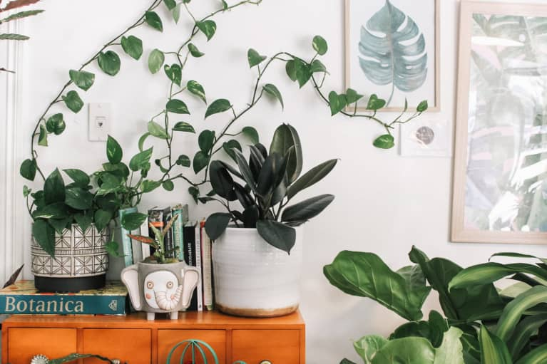 Cozy Bedroom Shelf With A Variety of Houseplants
