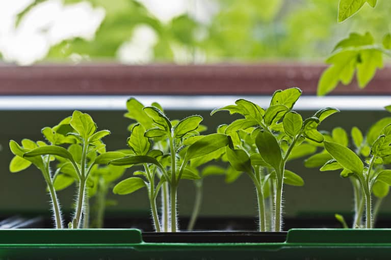 The Easiest Food To Grow At Home (No Matter How Much Room You Have)