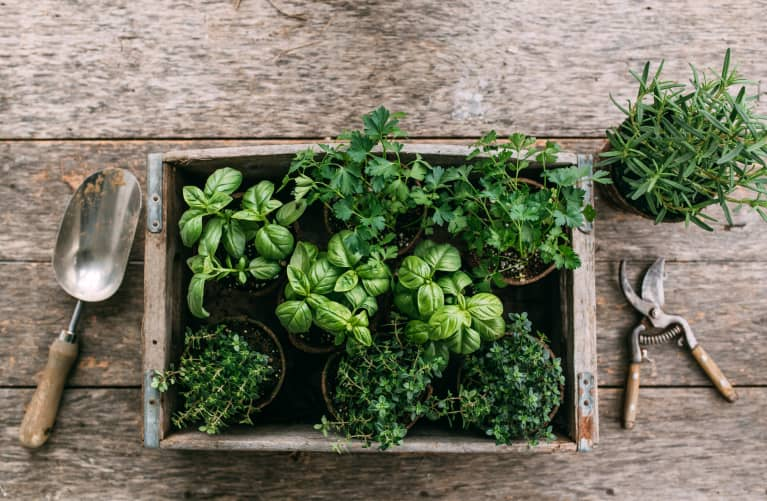 How To Grow Your Own Food If You Don't Have A Garden