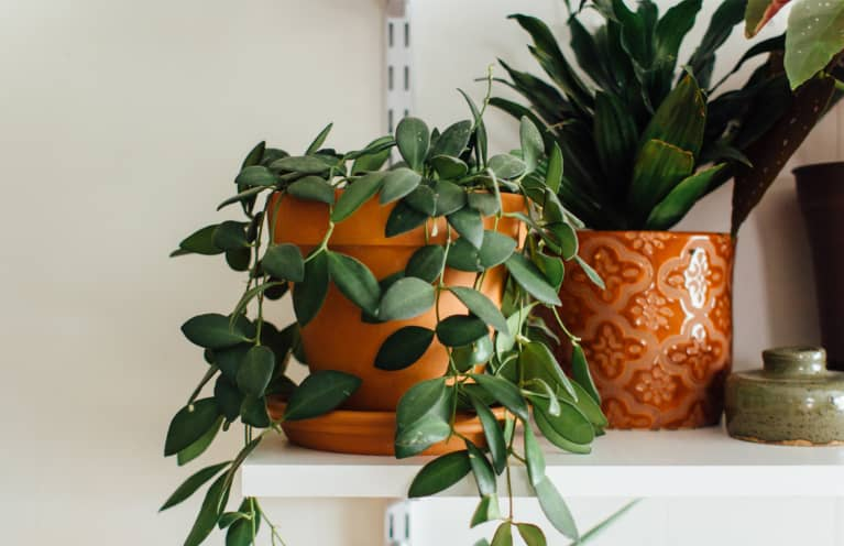 How To Tell If Your Plant Is Dead—Or Just Dormant During The Winter