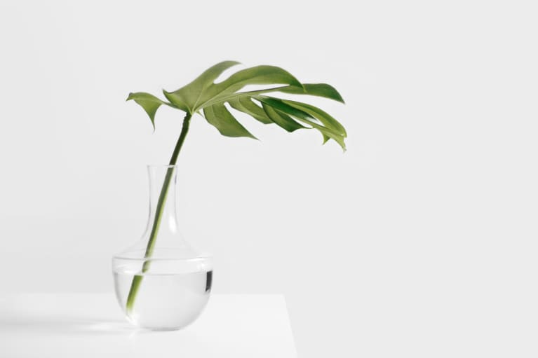 Plants Are Super Powerful In Feng Shui — Here Are 5 Reasons Why